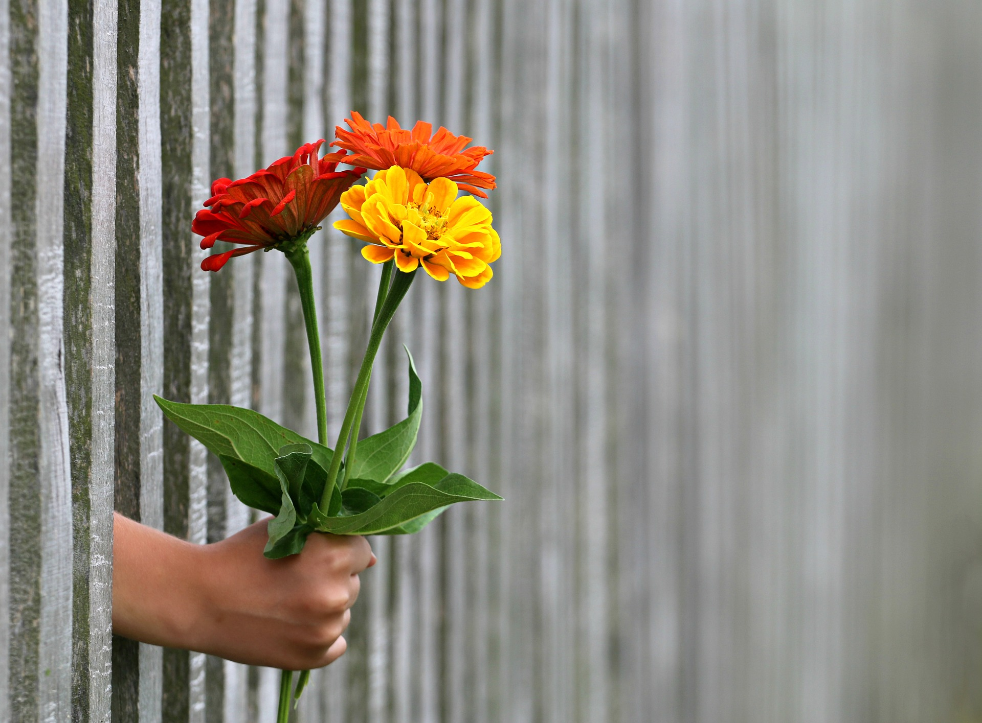 hands coming our of wall holding flowers